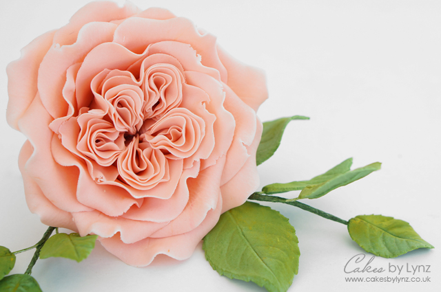 David Austin Rose Tutorial