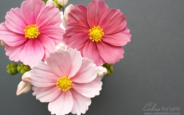 Cosmos Flower tutorial