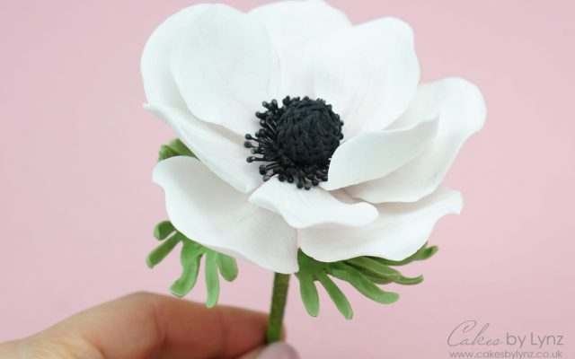 gumpaste anemone flower tutorial
