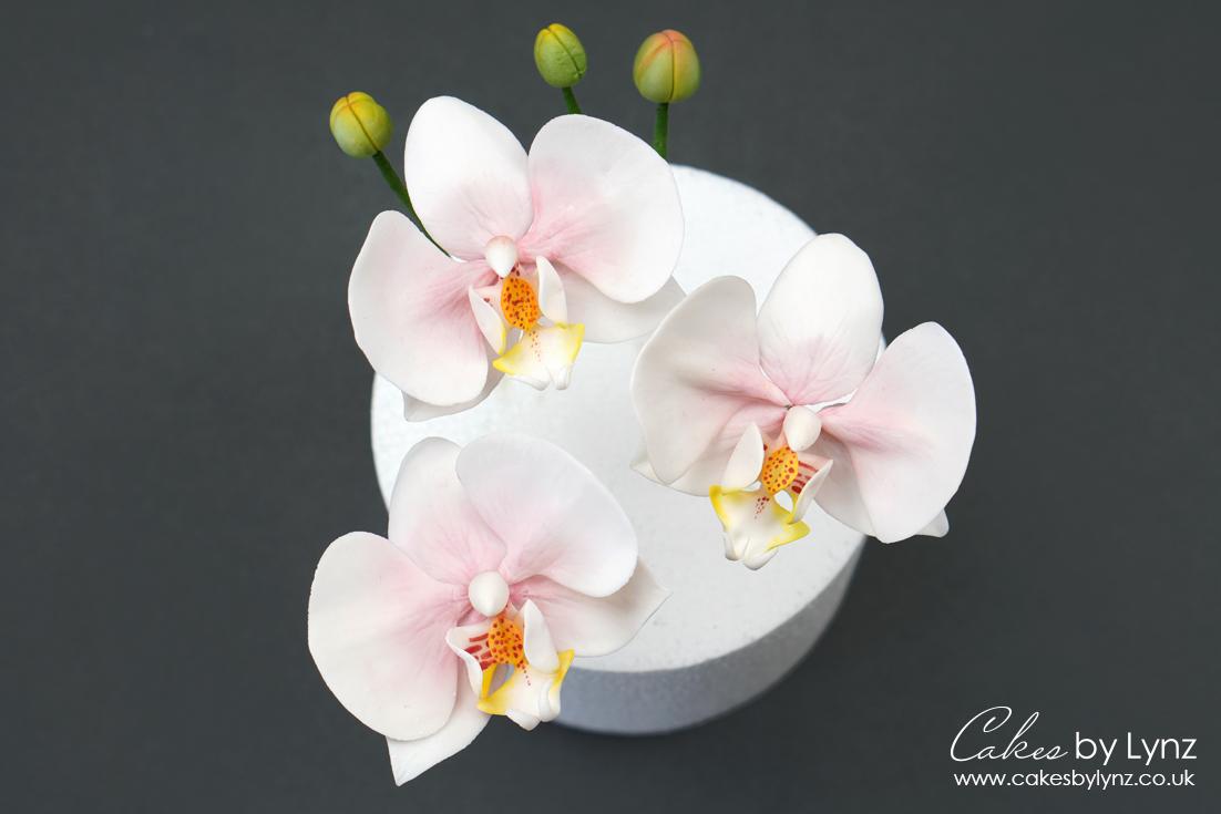 how to make Gumpaste sugar orchids tutorial